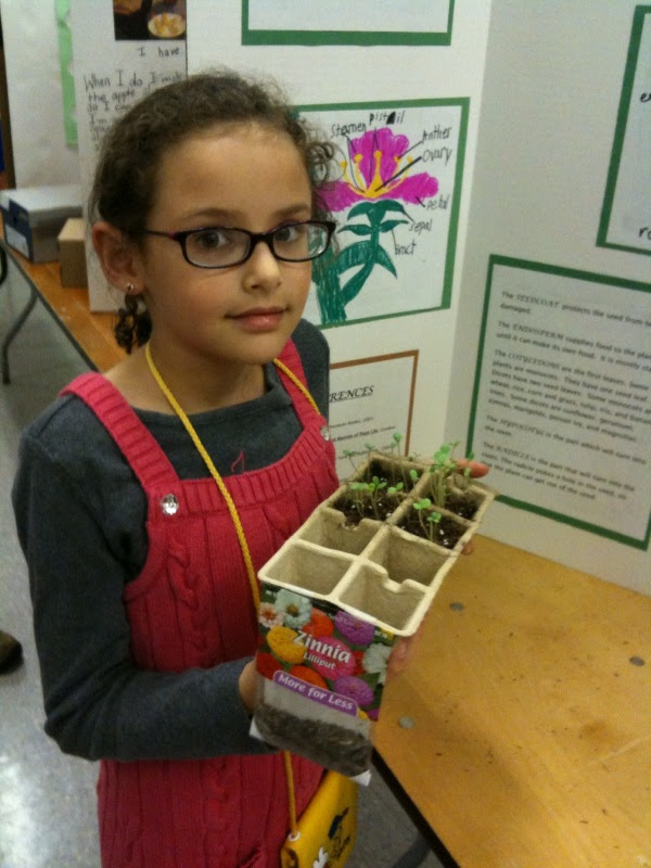 Pittsfield Elementary School's science fair projects span ...