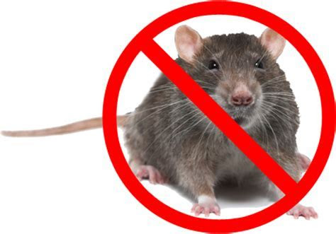 Keep Mice And Rodents Out Of Your Rv Mouse Free   Autos Post