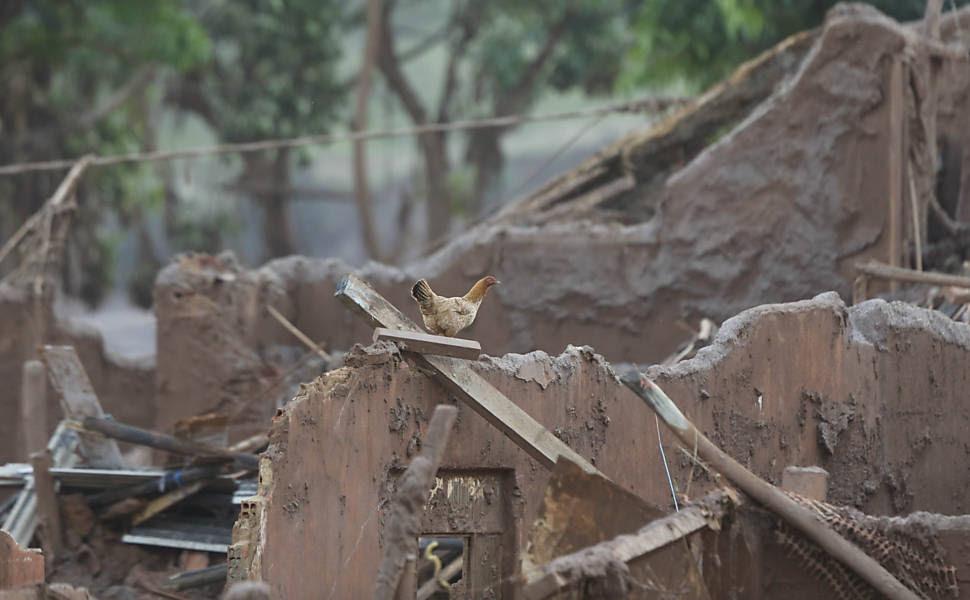 Galinha se refugia da lama no alto dos escombros da vila de Bento Rodrigues, destruída por uma enxurrada de lama após rompimento de barragens nos município de Mariana (MG)