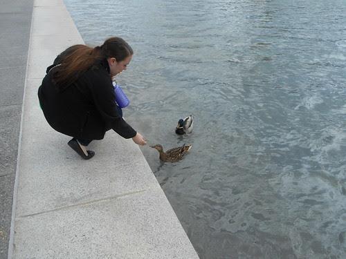 duck feeding (3)