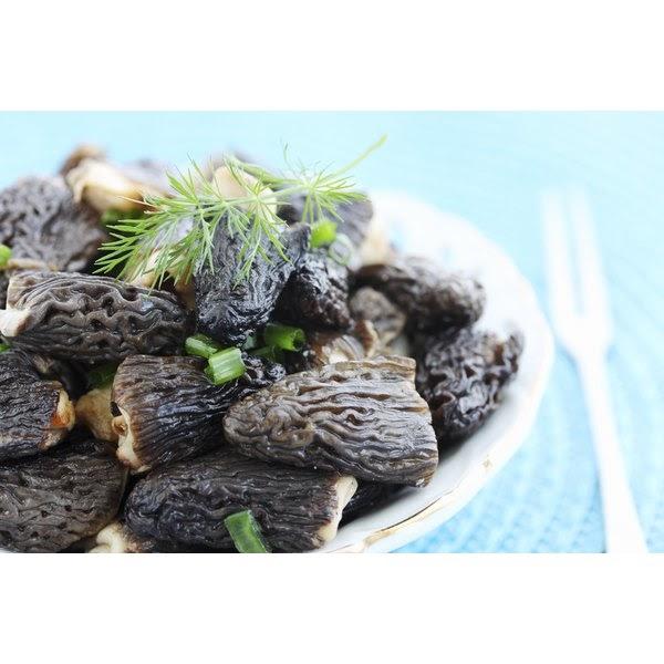gucci mushroom benefits  all mushroom info