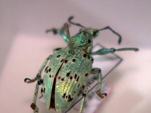 Os insetos chegam congelados para os biólogos (Foto: RBS TV / Reprodução)