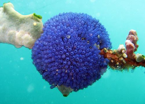 A ball of Bluebells