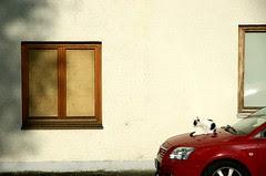 Die Katze auf der heißen Motorhaube