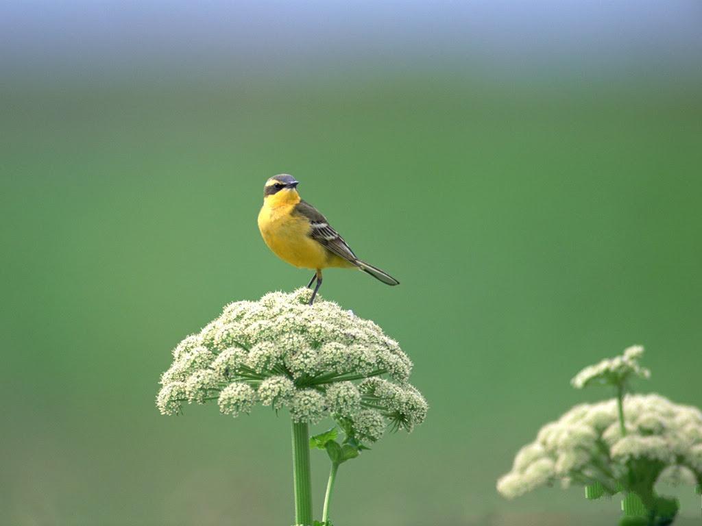 mp3 download free forever: birds photography standing on green
