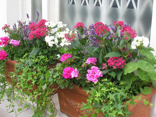 pretty window box mix purple pink white flowers