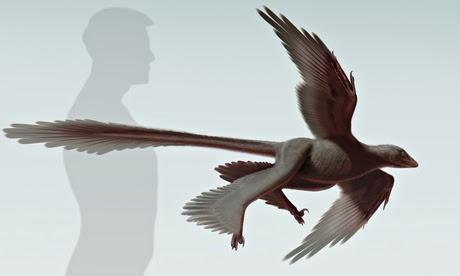 Artist's impression of the four-winged dinosaur Changyuraptor yangi