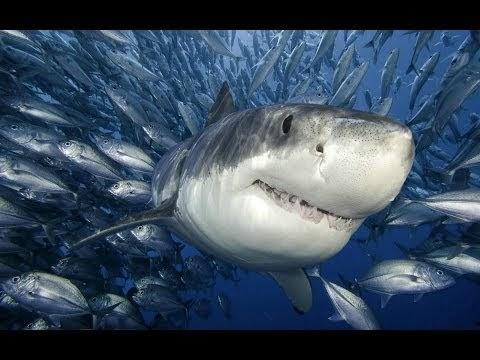 Q Significa Shark QUE SIGNIFICA SOÑ...