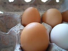 farm-fresh eggs