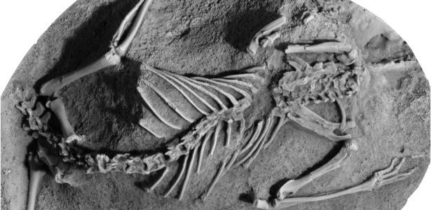 Mamíferos quase foram extintos juntamente com dinossauros, aponta estudo