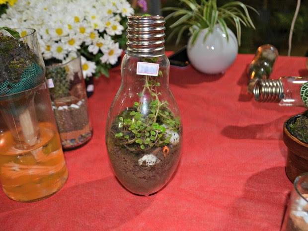 Agrônoma vende minijardins em lâmpadas, em Rio Branco (Foto: Quésia Melo/G1)