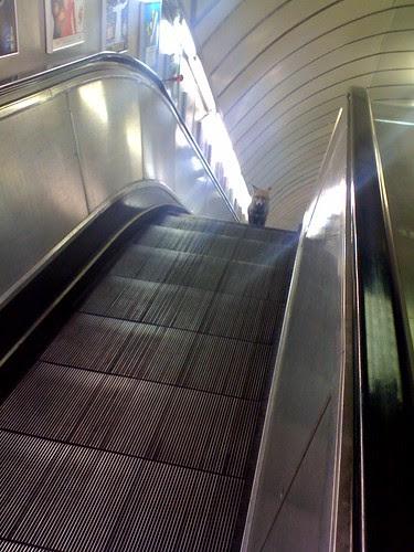 Underground Urban Fox by Kate Arkless Gray