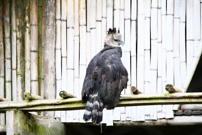 perierga.gr - Ο μεγαλύτερος και ισχυρότερος αετός στον κόσμο!