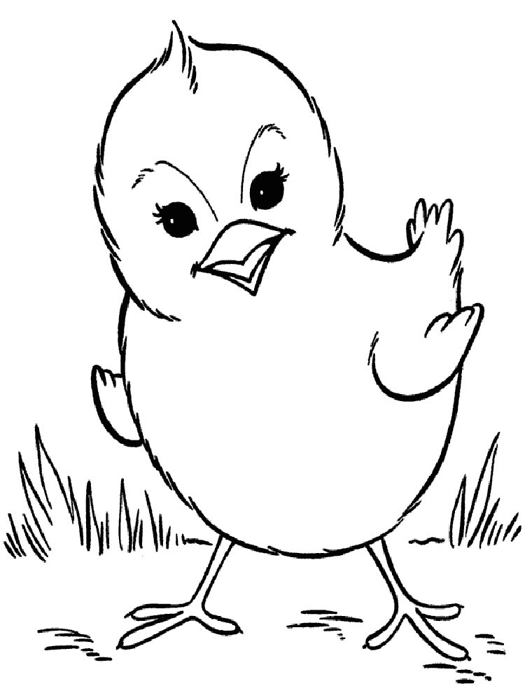 animals baby chick coloring pages 7