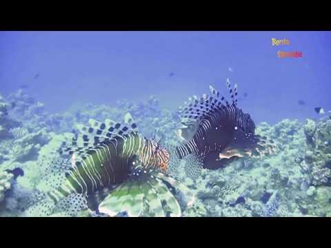 Indahnya Sensasi Pantai di Pulau Liwungan