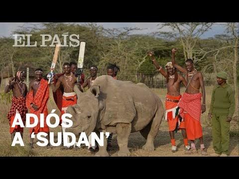 282. ¡Hasta siempre, Sudan!