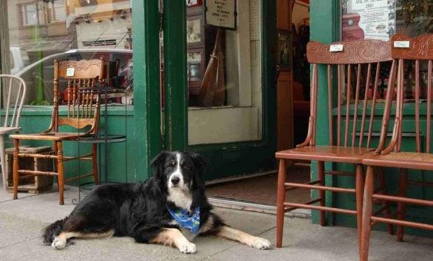 ¿Pueden los perros entrar a las tiendas?