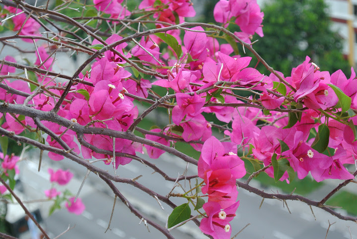 flowers by nikon 1 J2