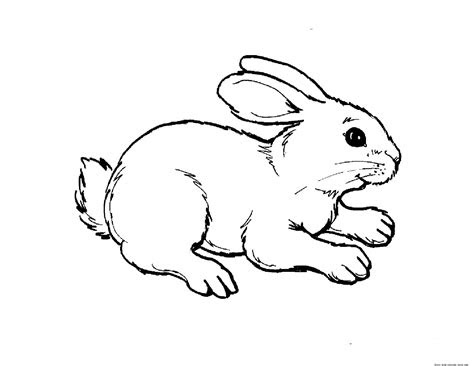 print  animal rabbit pictures colouring pages