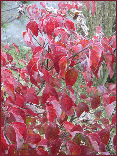 15 red leaves