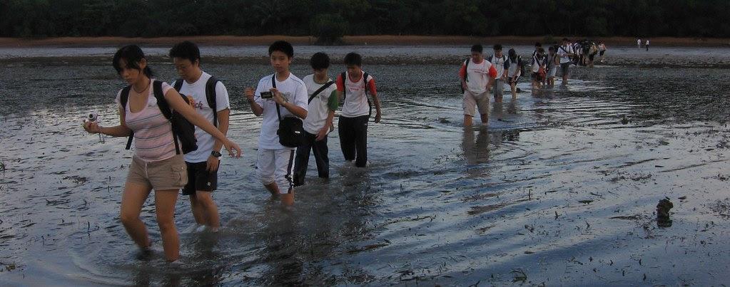Semakau intertidal seagrass lagoon