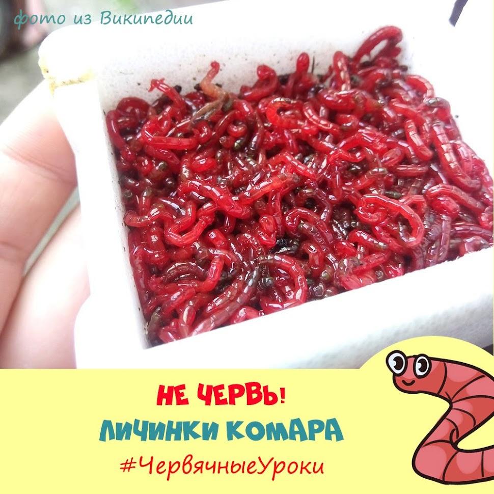 Занятия для детей по биологии. Изучение дождевого червя.