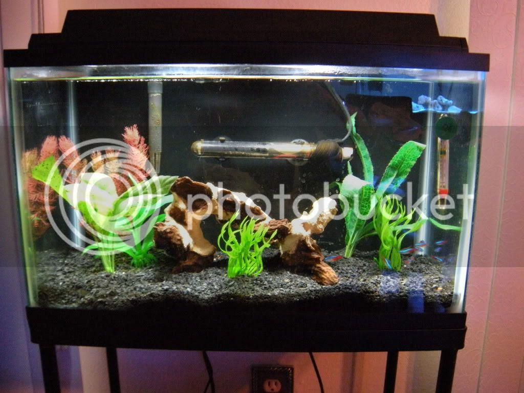 Decorating ideas? - Aquarium Advice - Aquarium Forum Community