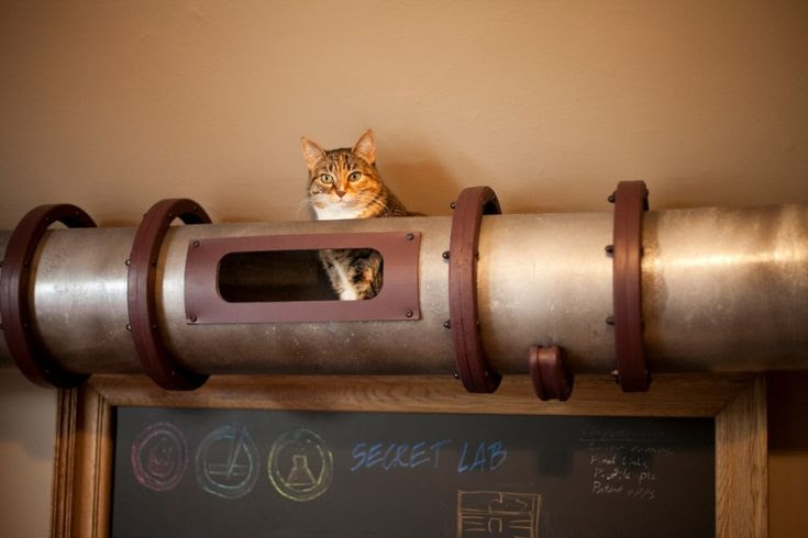 Home Office Cat Tunnel In Steampunk Style