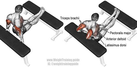 bench dip exercise instructions  video weight