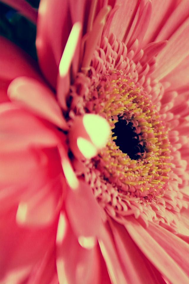 Iphone壁紙 ケース ピンクのお花壁紙