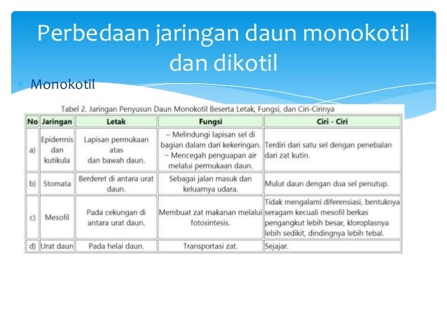Perbedaan Struktur Jaringan Dikotil Dan Monokotil