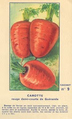 legume9 carotte