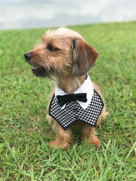 25  best ideas about Dog wedding attire on Pinterest