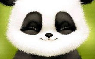 cute baby panda wallpaper  android  cute wallpapers