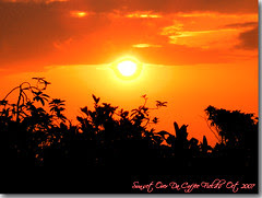 Sunset Over Da Coffee Fields- Captain Cook, Ha...
