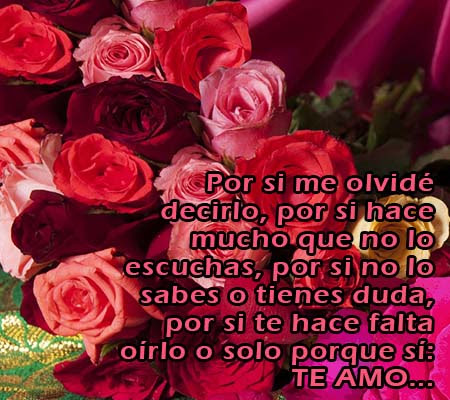 Rosas Con Frases De Amor Para Mi Novia Rosas De Amor