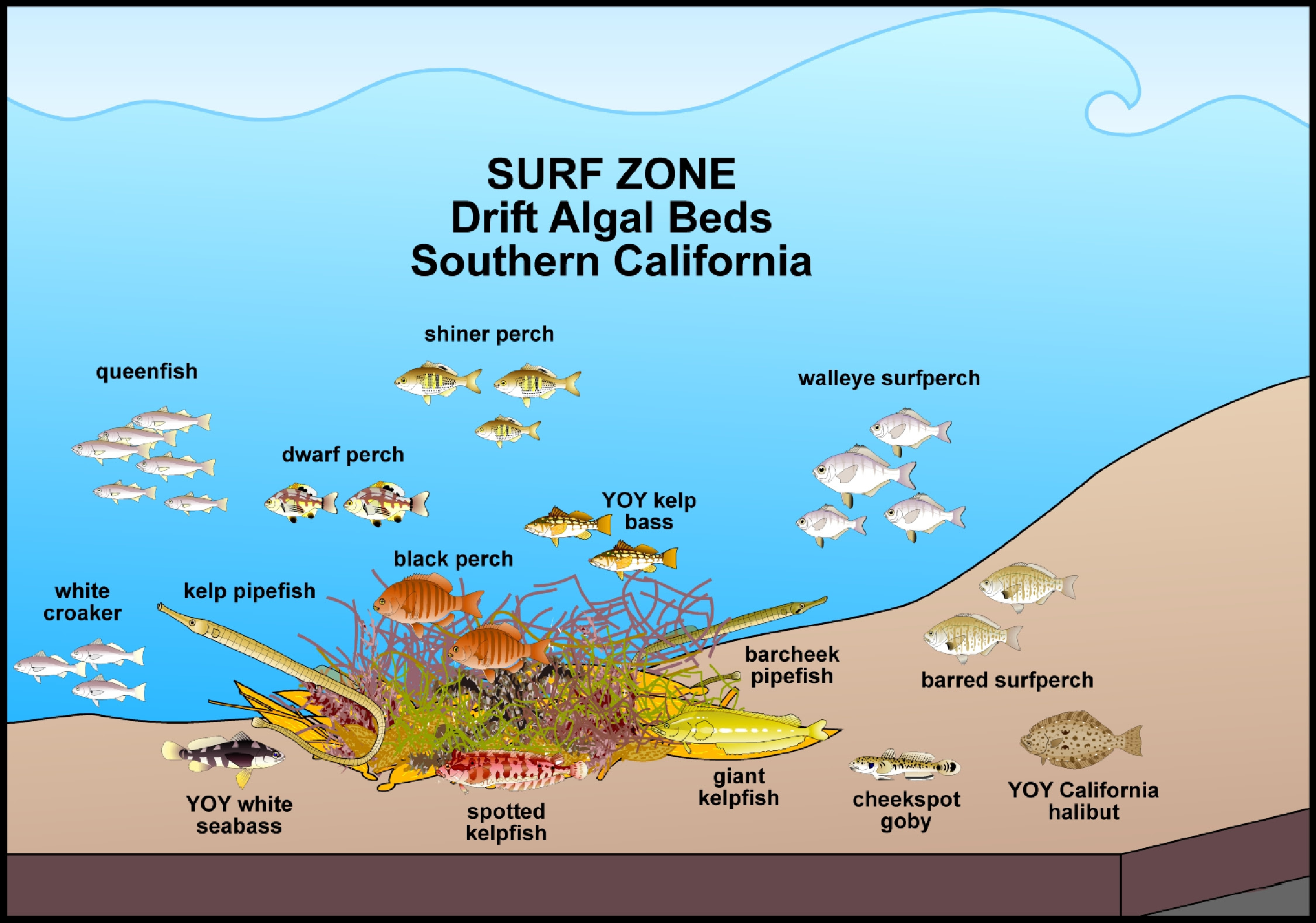 The Ecology Of Marine Fishes California And Adjacent Waters