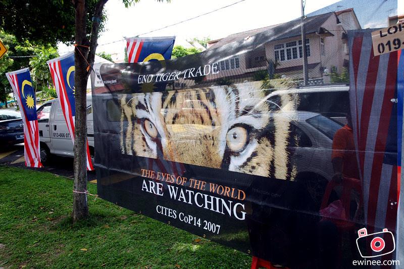 MALAYSIAKU-MELAYSIA-DAY-JALAN-BAGKUNG-tigers-save