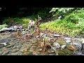 Fishing di Alam Liar, Pulangnya Bawa Bakalan Bonsai Jenis Loa