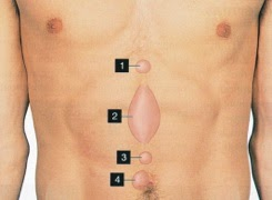 Lump in the Stomach above Belly Button - healthhearty.com