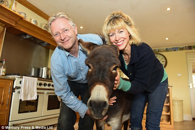 Part of the family: The little donkey does get up to mischief, often holding lady's skirts or cardigans firmly in his mouth
