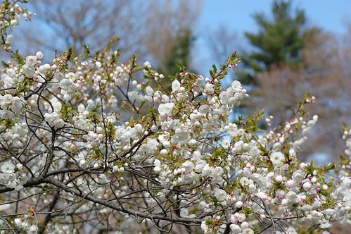 FlowersBudding