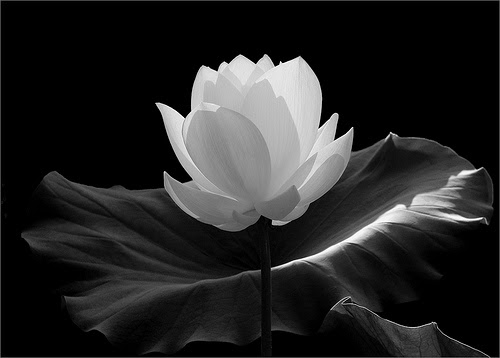 Free Flower Black And White Download Free Clip Art Free Clip Art