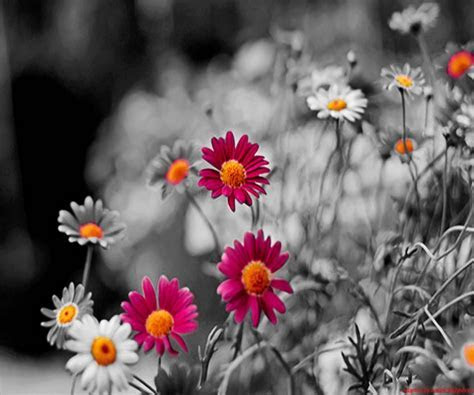 Cute Flowers Android Wallpapers 960x800 Hd Wallpaper