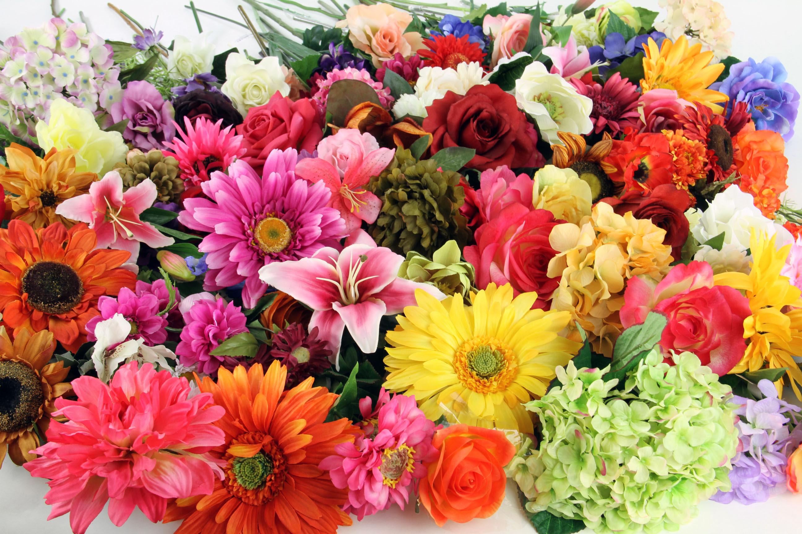 Bildergebnis für flowers in june