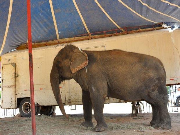 Lady passará por um tempo de adaptação, antes de começar a receber os visitantes da Bica (Foto: Divulgação/Secom-JP)