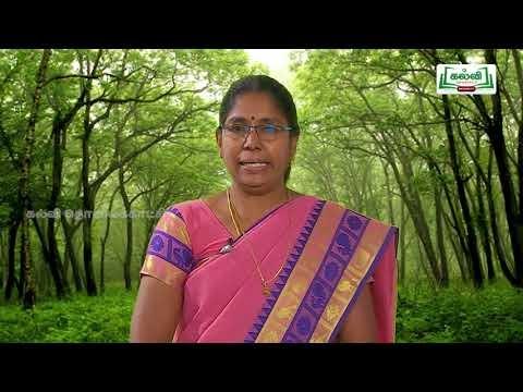 7th Tamil காடு அலகு 2 Kalvi TV