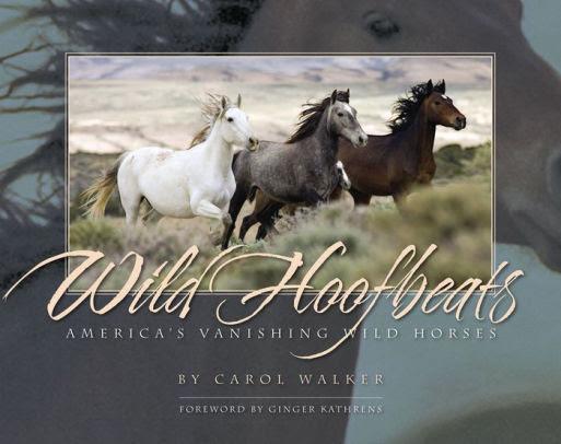 Wild Hoofbeats Americas Vanishing Wild Horses