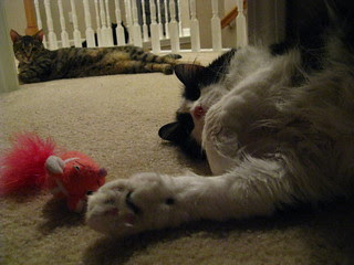 Josie napping with pink mouse