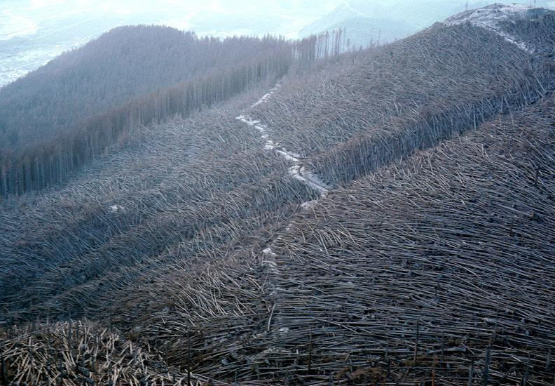 trees-blown-down-by-eruption-of-mount-st-helens